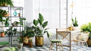 3 Manfaat Memelihara Tanaman Hias di Rumah